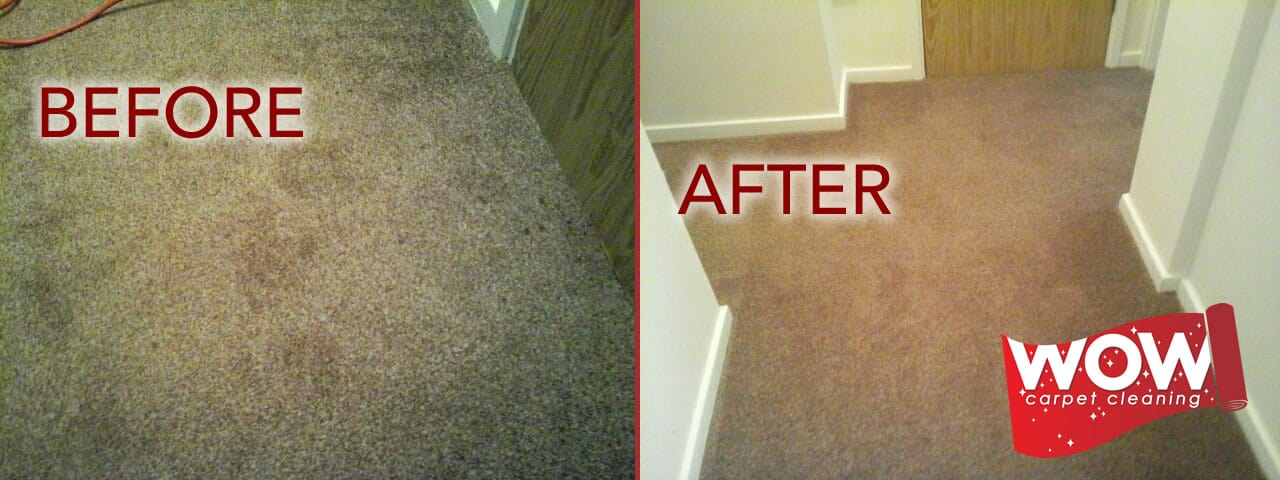 Blood Stains Removed from Carpet
