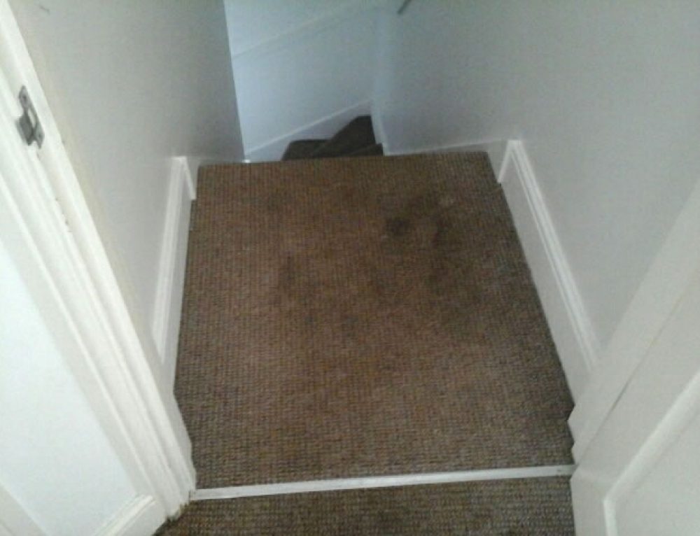 Carpet Stain Removal & Cleaning
