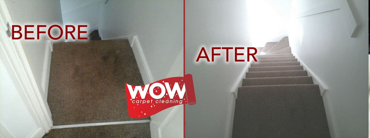 Carpet Cleaning with Dog Poo Staining